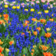 Essential oils or Flowers HR 002
